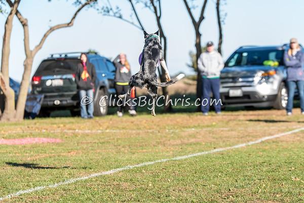 UpDog Challenge - Saturday, Oct. 17, 2015 - Frame: 2986
