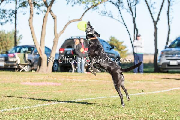 UpDog Challenge - Saturday, Oct. 17, 2015 - Frame: 2963