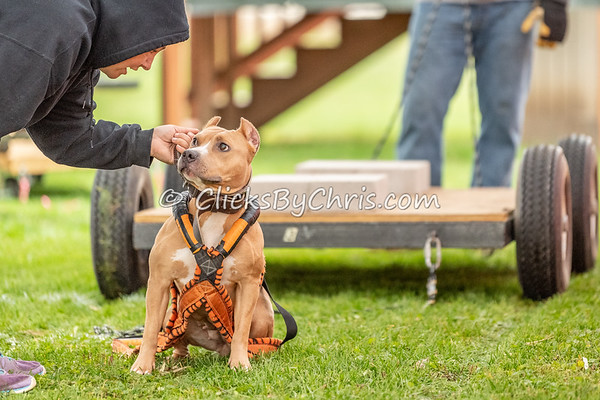 NIKA Weight Pull Natural Surface - Northern Illinois K9 Association - Southtown K9 - Saturday, Nov. 3, 2018