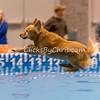 2014 NADD/AKC Eukanuba Diving Dog Championship - December 13, 2014
