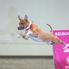 2014 NADD/AKC Eukanuba Diving Dog Championship - December 14, 2014