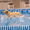 2014 NADD/AKC Eukanuba Diving Dog Championship - December 14, 2014
