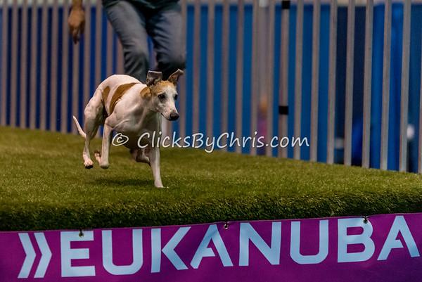 2014 NADD/AKC Eukanuba Diving Dog Championship - December 11, 2014