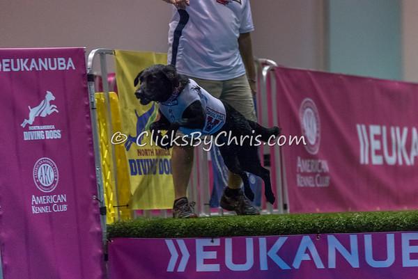 2014 NADD/AKC Eukanuba Diving Dog Championship - December 9, 2014