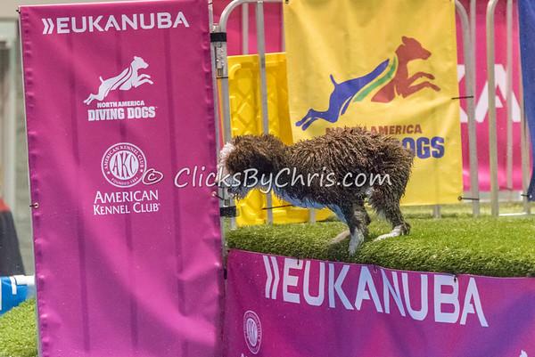 2014 NADD/AKC Eukanuba Diving Dog Championship - December 10, 2014