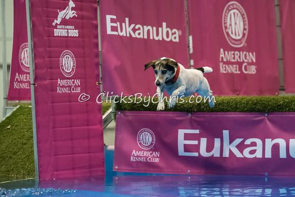 2015 NADD/AKC Eukanuba National Championship - Tuesday, Dec. 8, 2015 - Frame: 0702