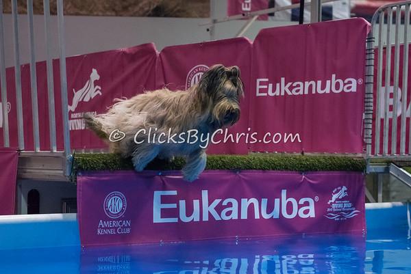 2015 NADD/AKC Eukanuba National Championship - Tuesday, Dec. 8, 2015 - Frame: 0269