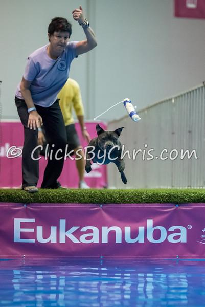 2015 NADD/AKC Eukanuba National Championship - Tuesday, Dec. 8, 2015 - Frame: 0690