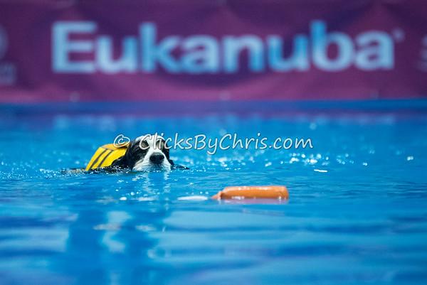 2015 NADD/AKC Eukanuba National Championship - Thursday, Dec. 10, 2015 - Frame: 2363