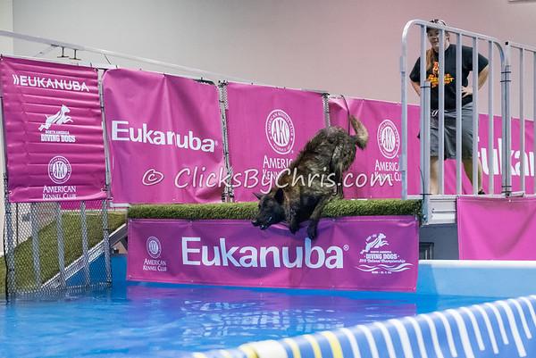 2015 NADD/AKC Eukanuba National Championship - Thursday, Dec. 10, 2015 - Frame: 1377