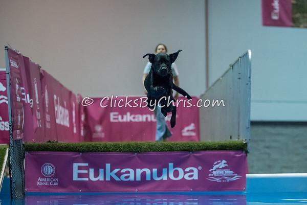 2015 NADD/AKC Eukanuba National Championship - Thursday, Dec. 10, 2015 - Frame: 2384