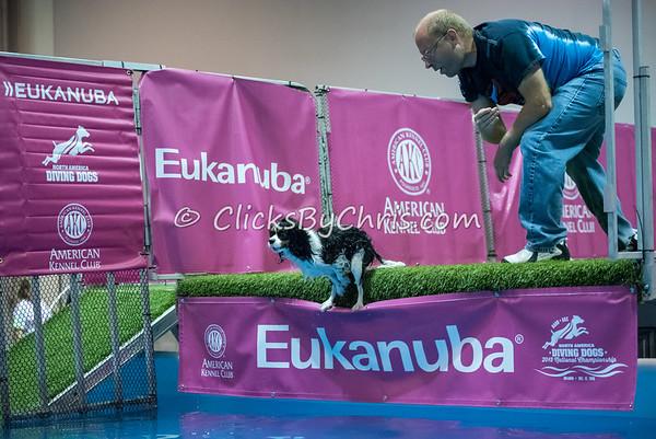 2015 NADD/AKC Eukanuba National Championship - Saturday, Dec. 12, 2015 - Frame: 5739