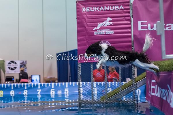 2015 NADD/AKC Eukanuba National Championship - Sunday, Dec. 13, 2015 - Frame: 5047