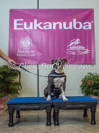 2015 NADD/AKC Eukanuba National Championship - Wednesday, Dec. 9, 2015 - Frame: 1144