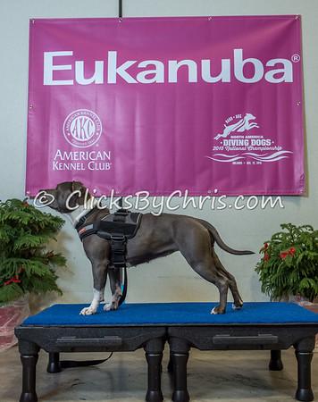 2015 NADD/AKC Eukanuba National Championship - Wednesday, Dec. 9, 2015 - Frame: 1138