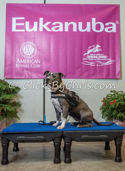2015 NADD/AKC Eukanuba National Championship - Wednesday, Dec. 9, 2015 - Frame: 1135