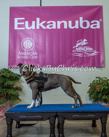 2015 NADD/AKC Eukanuba National Championship - Wednesday, Dec. 9, 2015 - Frame: 1139