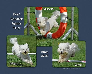 Ouchterloney 8x 3-dog montage