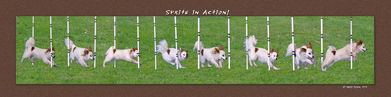 Foley Sprite weave montage6 w rourgh grass