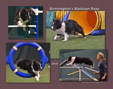 Ferentinos 11 Madison montage