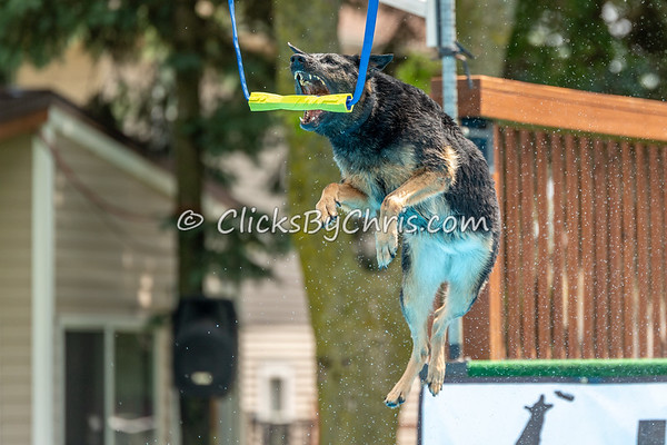 NIKA Dock Diving - Northern Illinois K9 Association - Southtown K9 - Saturday, June 9, 2018