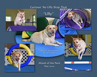 Tecce 16x 5-photo Lilly montage