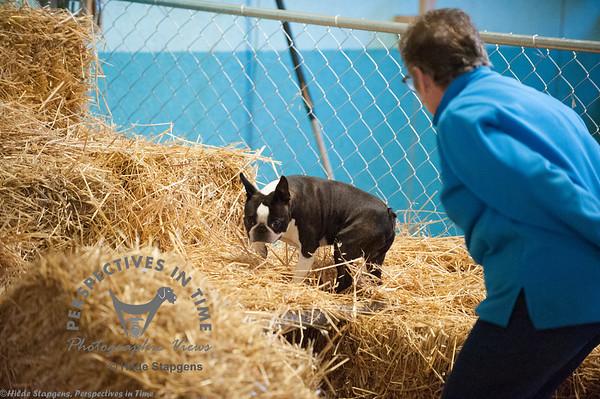 2015 CIKC Barn Hunt 9-19-15, Sirius Ranch