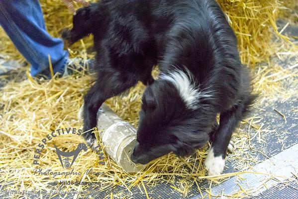 2016 Barn Hunt 9-17-16