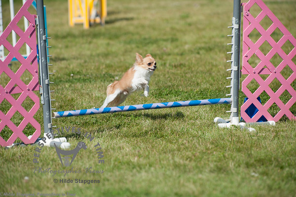 2015,  AKC agility at Sirius  - day 2