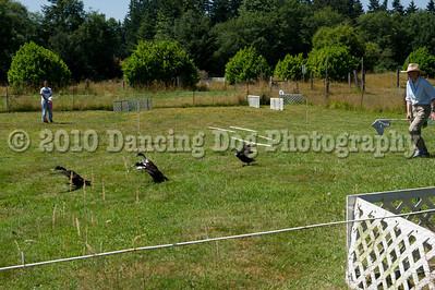 Fidos_Farm_Camp_Friday_Fun-227