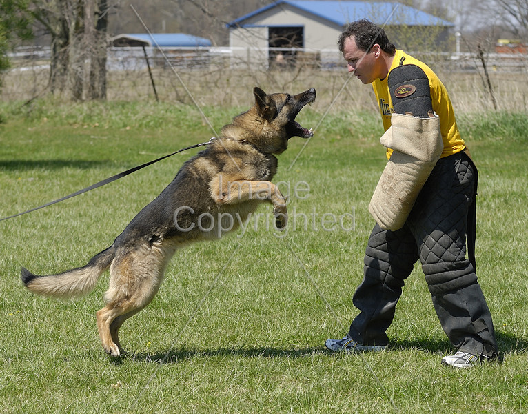 Anthony's GSD, Jedo