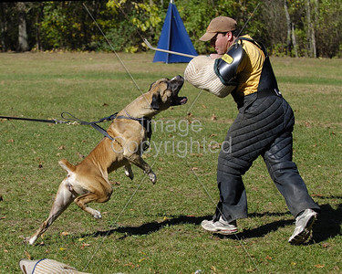 K9s and Dog Training Favorites