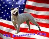 """<h1><center>Have your dog put on a custom background!</center></h1> <h3> <li>This is a sample of our custom background</li>  <li>Custom prints are available in 8x10(lustre) format and are priced at $20.00</li>  <li>Please contact me via <a href=""""mailto:courtney@cnhphotos.com"""">e-mail</a> if you would like to order a custom 8x10 of your favorite photo.  Make sure you include in the e-mail your name, phone number and the file name that you want me to use</li>  <li>I will create the file, upload it to the site and e-mail you when it's ready to be ordered</li>  <li>Please note: Since the show was in grass, there will be grass on your dogs feet.  I will do my best to get rid of as much as I can, but there will still be some grass and your dogs feet will not be completely defined.</li></h3>"""