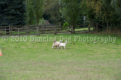 PacNW_HT_Sat_Sheep-5922