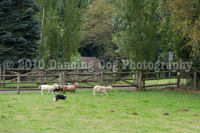 PacNW_HT_Sat_Sheep-5883