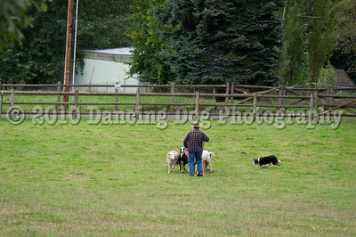 PacNW_HT_Sat_Sheep-5874