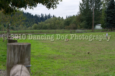 PacNW_HT_Sat_Sheep-5910