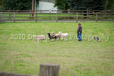 PacNW_HT_Sat_Sheep-5875