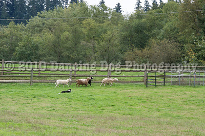 PacNW_HT_Sat_Sheep-5879