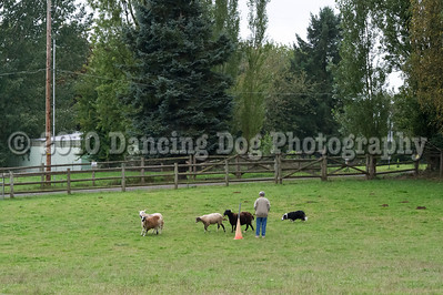 PacNW_HT_Sun_Sheep-6439