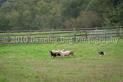 PacNW_HT_Sun_Sheep-6461