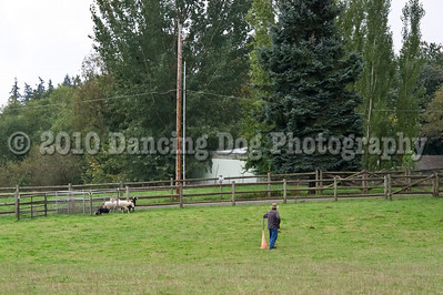 PacNW_HT_Sun_Sheep-6467