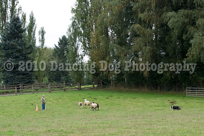 PacNW_HT_Sun_Sheep-6438