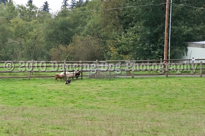 PacNW_HT_Sun_Sheep-6466