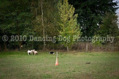 PacNW_HT_Sun_Sheep-6481