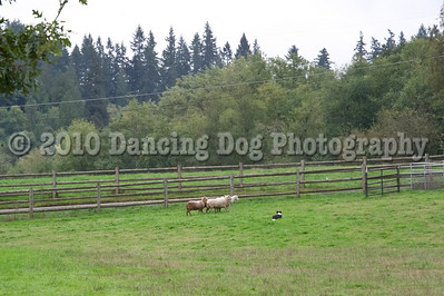 PacNW_HT_Sun_Sheep-6464