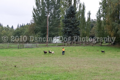 PacNW_HT_Sun_Sheep-6444
