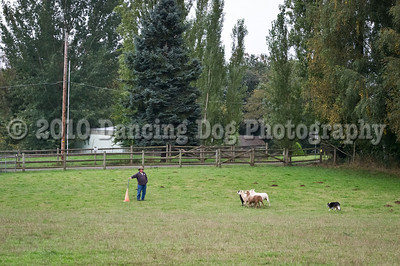 PacNW_HT_Sun_Sheep-6458