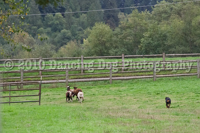 PacNW_HT_Sun_Sheep-6446