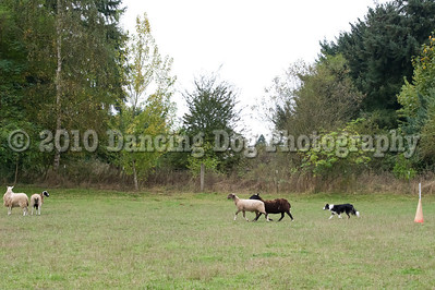 PacNW_HT_Sun_Sheep-6436